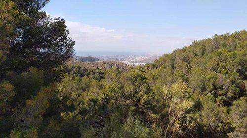Natural Park Views